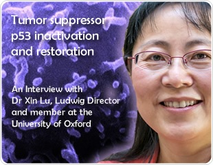 Tumor suppressor p53 inactivation and restoration: an interview with Dr. Lu