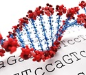 Researchers use DNA sequencing technology to identify gene variants that affect susceptibility to SLE