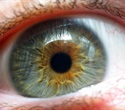 Exposure to blue light may lead to eyestrain but does not damage retina