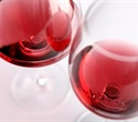Component in red wine and grapes can suppress inflammation linked to airway disease