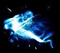 A quantitative study of brain activity using light sheet microscopy