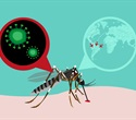 Researchers find high-resolution structure of immature Zika virus