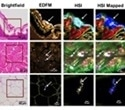 Researchers demonstrate novel method for imaging engineered nanoparticles in tissues