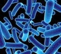 Researchers reveal key role of bacteria-binding protein in intestine
