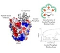 Study on HDAC enzymes could lead to development of better drugs for treatment of cancer, Alzheimer's