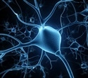 Research findings may have implications for ALS and other neurological disorders