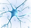 DZNE scientists find new mechanism that allows damaged neurons to regenerate