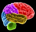 Elevated levels of brain protein linked to longer recovery period after concussion