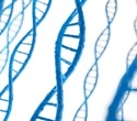 New study shows variation in junk DNA can affect health