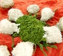 Broccoli sprout extract may help prevent cancer recurrence in head and neck cancer survivors