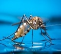 Africa and Asia at greatest risk of Zika virus