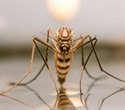 Zika-related travel recommendations extended to Southeast Asia